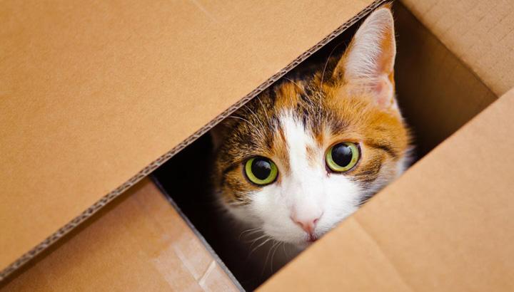 Cómo hacer una mudanza con gatos